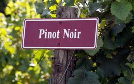 Pinot-Noir_473x295px