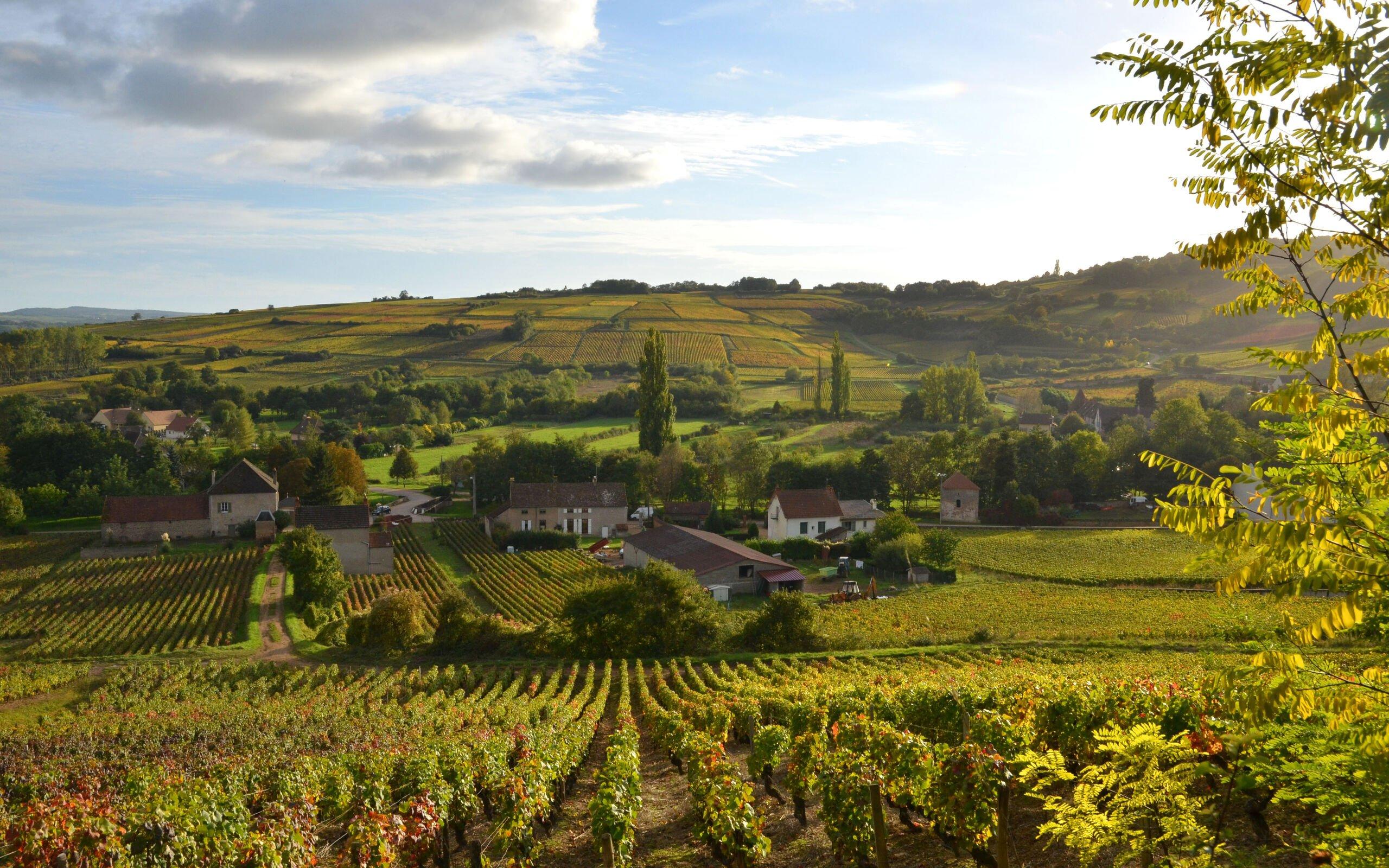 burgund-rundreise-landschaft-weinberge-0FN_0799